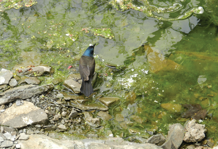 Bird in the water in Park Royal by Antonella Corsino